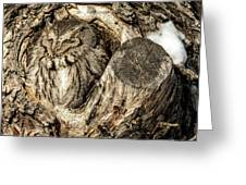 Screech Owl In Cavity Nest Greeting Card