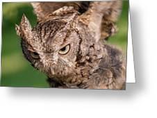 Screech Owl In Flight Greeting Card