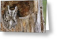 Screech Owl In Hole Greeting Card