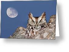 Screech Owl Greeting Card