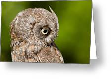 Screech Owl Portrait Greeting Card