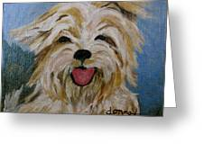 Scruffy Greeting Card