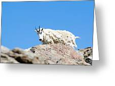 Scruffy Mountain Goat On The Mount Massive Summit Greeting Card