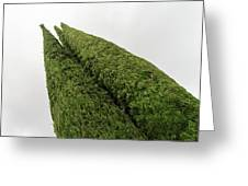 Sculpturesque Greenery - Three Cypress Trees Chiseled Against The Sky Greeting Card