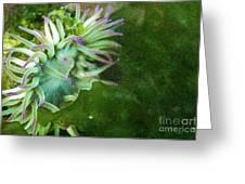 Sea Anemone And Kelp  Greeting Card