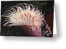 Sea Anemone Greeting Card