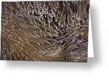 Sea Anemone Closeup Greeting Card