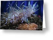 Sea Anemone Greeting Card