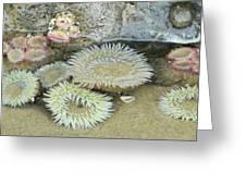 Sea Anemones Greeting Card