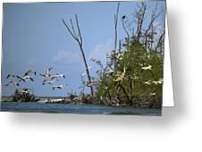 Sea Bird Flight Greeting Card
