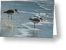 Sea Birds #2 Greeting Card