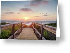 Sea Birds At Sunrise Greeting Card