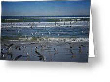 Sea Birds Feeding On Florida Coast Dsc00473_16 Greeting Card