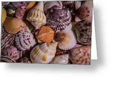 Sea Bones 19 Greeting Card