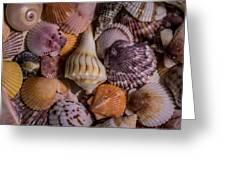 Sea Bones 20 Greeting Card