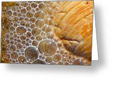 Sea Bubbles Greeting Card