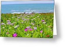 Sea Daisy Trail Greeting Card
