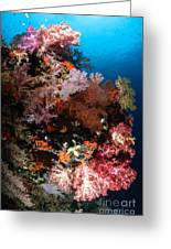Sea Fans And Soft Coral, Fiji Greeting Card