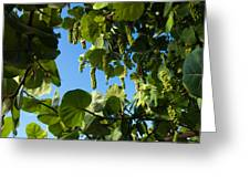 Sea Grapes In Summer Greeting Card