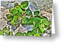 Sea Grapes  Greeting Card