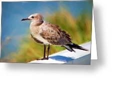 Sea Gull Of Boca Grande Greeting Card