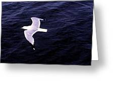 Sea Gull Over Water Dbwc Greeting Card