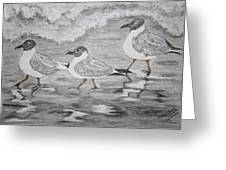 Sea Gulls Dodging The Ocean Waves Greeting Card