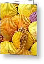 Sea Horse And Sea Shells Greeting Card