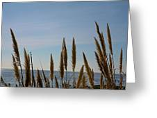 Sea Horse Tails Greeting Card