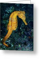 Sea Horse Underwater View Greeting Card