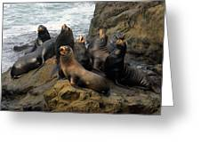 Sea Lion Chorus Greeting Card