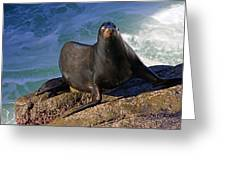 Sea Lion Exit Greeting Card