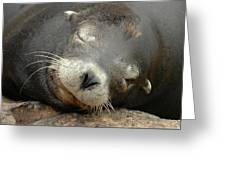 Sea Lion In San Francisco Greeting Card