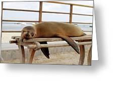 sea lion on a bench in Puerto Ayora, Santa Cruz Island, Galapagos Greeting Card
