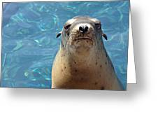 Sea Lion Or Seal Greeting Card