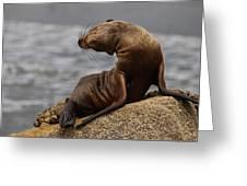 Sea Lion Pup Greeting Card