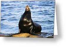 Sea Lion Sing Greeting Card