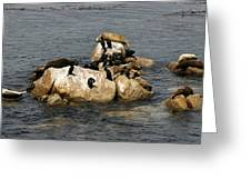 Sea Lions And Birds Greeting Card
