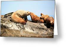 Sea Lions Greeting Card by Chris Dutton