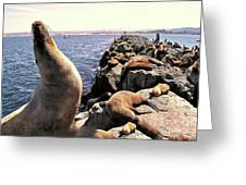 Sea Lions On Rock Pier Greeting Card