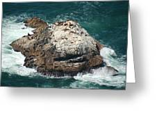Sea Lions Sunning Greeting Card by Suzanne Gaff