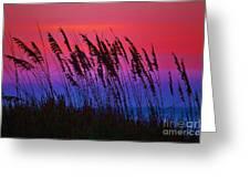 Sea Oat Sunset Greeting Card