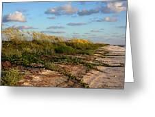 Sea Oats Along The Beach Greeting Card