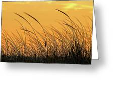 Sea Oats At Dusk Greeting Card