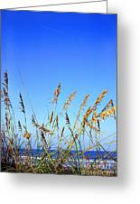 Sea Oats Atlantic Ocean Greeting Card