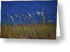 Sea Oats Greeting Card
