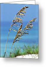 Sea Oats Gulf Of Mexico Greeting Card by Thomas R Fletcher