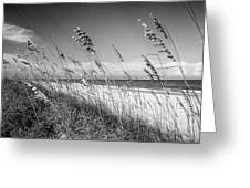 Sea Oats In Black And White Greeting Card