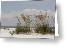 Sea Oats On A White Sandy Beach Greeting Card