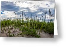 Sea Oats Sand Dune Sky Greeting Card